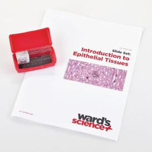 Introductory Epithelial Tissues Slide Set
