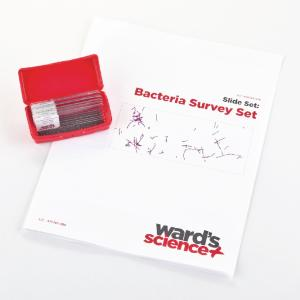 Bacteria Survey Slide Set