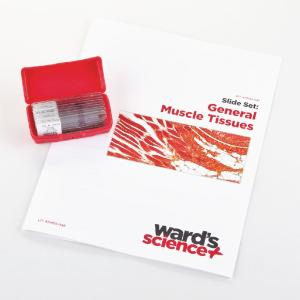 General Muscle Tissues Slide Set