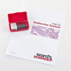 Endocrine System Slide Set