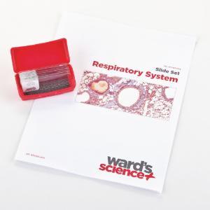 Respiratory System Slide Set