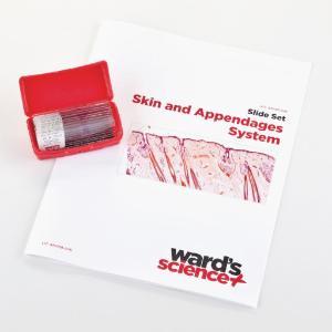 Skin and Appendages Slide Set