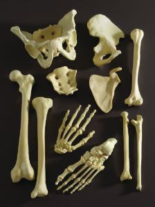 Foam Bones