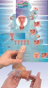 3B Scientific® Birth Control Training Bundle