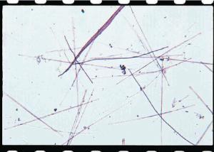 Synedra Slide