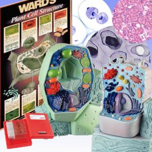 Plant And Animal Cell Bundle