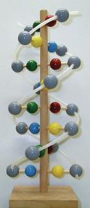 Wooden DNA Molecular Model