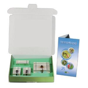 Realbug Kids: Dragonfly Lifecycle
