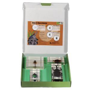 Realbug Kids: Insect Embedment Set