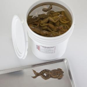 Formaldehyde-Free Grassfrogs
