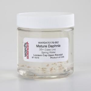 Live Water Fleas (<i>Daphnia magna</i>)