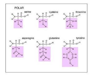 Amino Acids, Set of 20