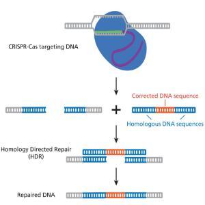 CRISPR for cystic fibrosis