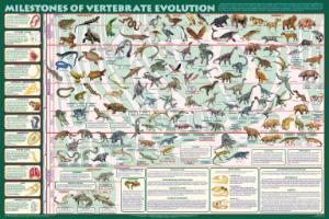 Milestones of Vertebrate Evolution Chart