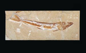 Prionolepis sp. (Cretaceous)