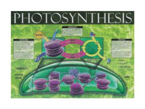 Cell Energy Posters