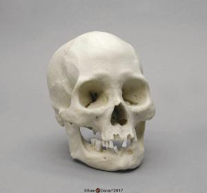 Human Female American Indian Skull