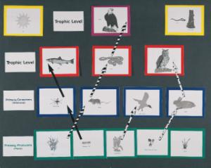 Food Chain & Trophic Levels Magnetic Board Manipulatives