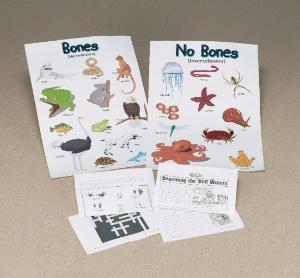 Bones & No Bones Posters and Study Kit