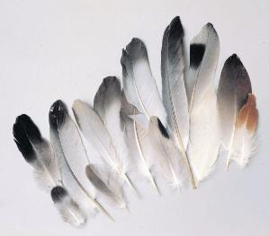 Ward's® Feather Set