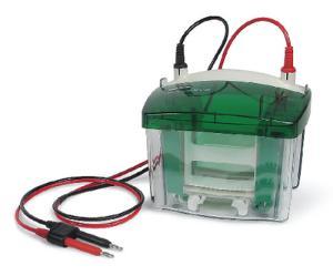 Mini-PROTEAN® Vertical Electrophoresis System