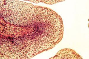 Mammalian Epithelial Tissue Set