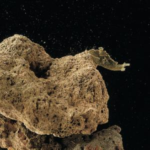 Ward's® Live Sea Slugs (<i>Nudibranch</i>)