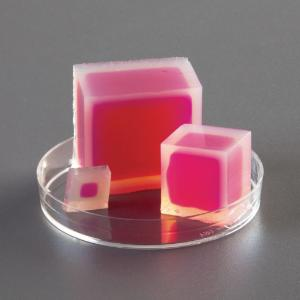 Ward's® Prepared Agar Cubes