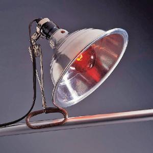 Ward's® Reptile Basking Lamp