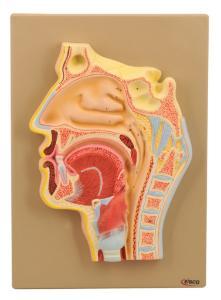 Eisco® Nose And Sinus Cavity