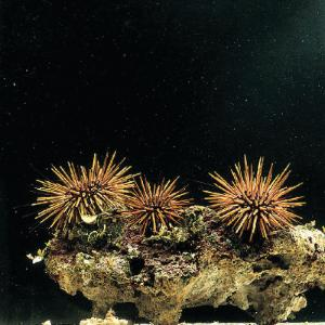 Ward's® Live Sea Urchin (<i>Strongylocentrotus sp.</i>)