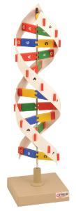 Eisco® DNA Molecule