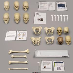 Forensic Anthropology Set