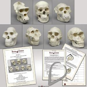Primates Set  With Lesson Plan