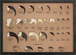 31 Claws in Riker