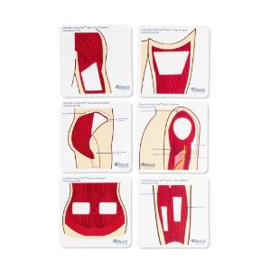 Anatomical templates color, small