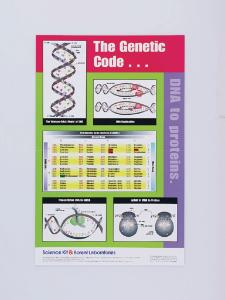 The Genetic Code: DNA To Proteins Poster