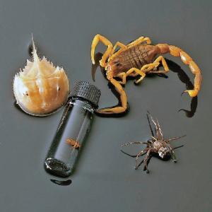 Ward's® Arachnid/Merostome Collection
