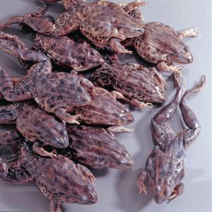 Preserved Grassfrogs, Plain Preserved