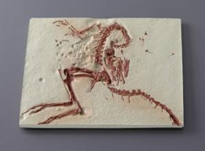 <i>Compsognathus</i> sp. (Jurassic)