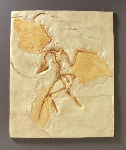 Archaeopteryx Fossil Reproduction