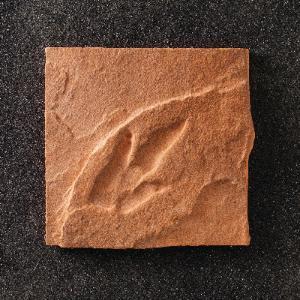 Triassic Theropod Track Replica