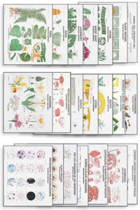 Denoyer-Geppert® Botany Chart Set