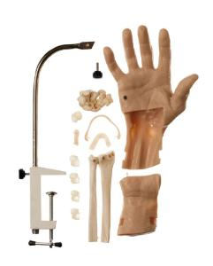 Somso® Arthroscopic Wrist