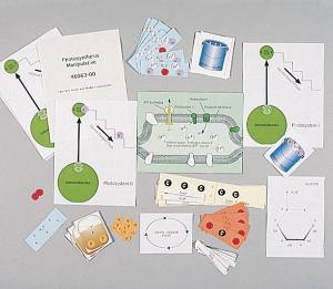 Ward's® Cellular Respiration & Photosynthesis Manipulative
