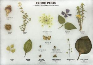 Exotic Pests