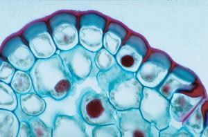 Generalized Plant Cell Slide