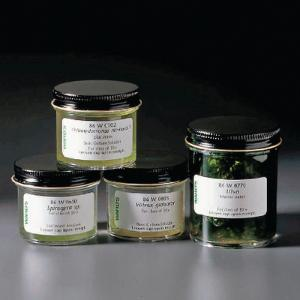 Ward's® Live Green Algae Forms Set: 4 Cultures