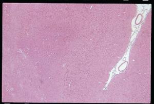 Cerebrum, Primate Slide