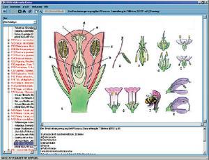 Botany in the Classroom CD-ROM